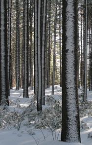 La mrc deux montagnes partenaires d veloppement conomique for Chambre de commerce de st eustache